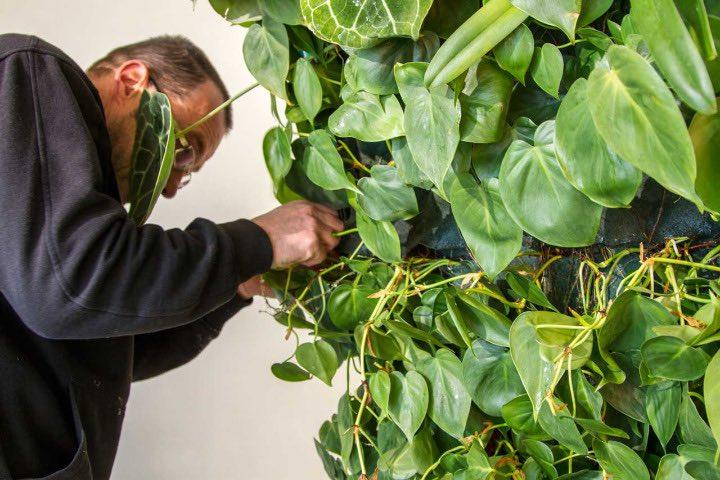 manutenzione-giardino-verticale-interno